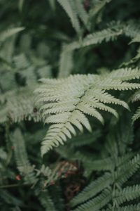 A fern at Norwich Plantation Gardens.