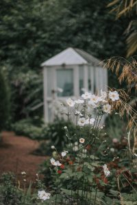 Beautiful flowers and glass house at the Plantation gardens Norwich.