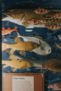 Fish display at Norwich Castle.