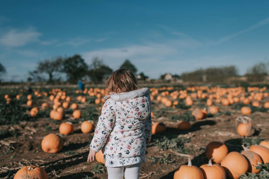 Pumpkin Picking Norfolk