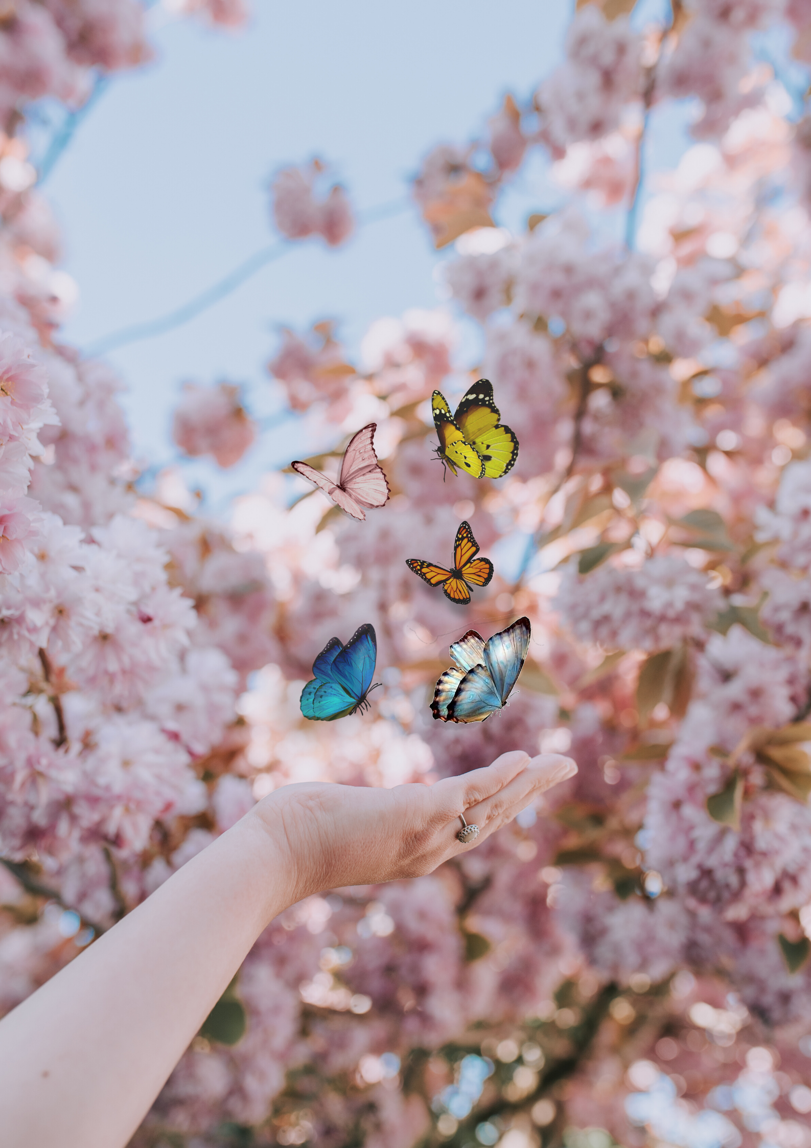 pics art creative photograph of blossom and butterflies